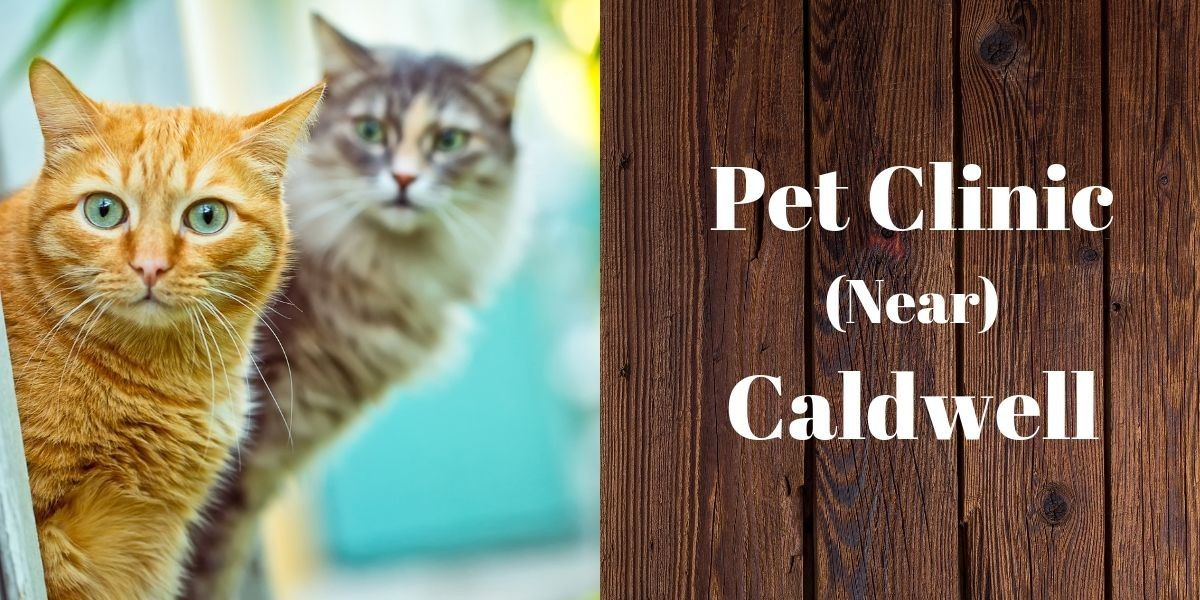 Pet Clinic Near Caldwell