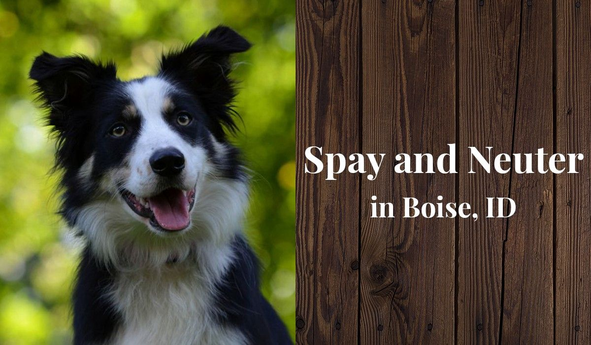 Spay and Neuter in Boise, ID