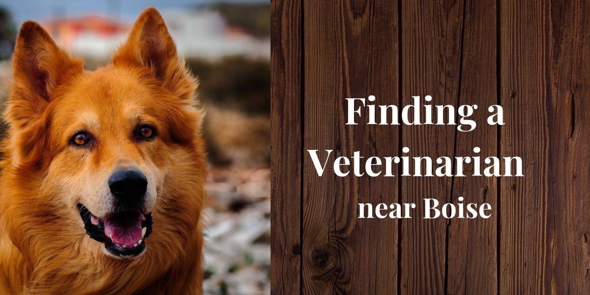 Finding a Veterinarian Near Boise