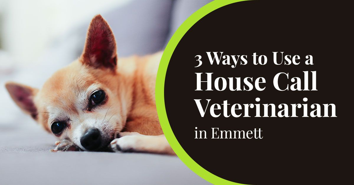 House call veterinarian in Emmett